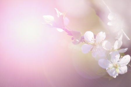 abstract flower background. flowers made with color filters Stock Photo - 13972180