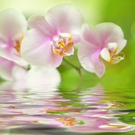 reflected: beautiful pink orchid flower background reflected in water Stock Photo