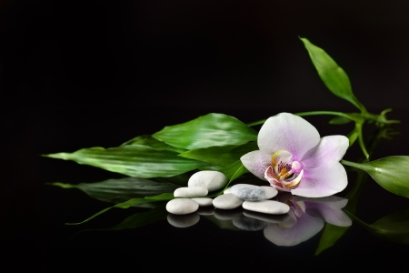 background of a spa with stones, orchid flower and a sprig of green bamboo Stock Photo
