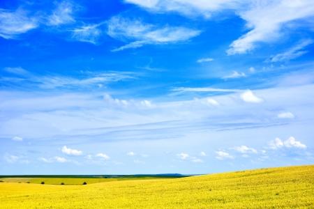 Beautiful summer field landscape scenic view photo