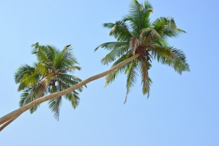 Image of two nice palm trees in the blue sunny sky