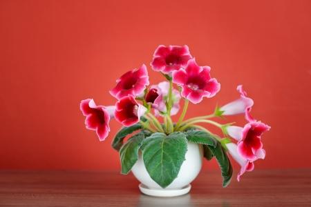 violet flowers in vase or flowerpot indoors