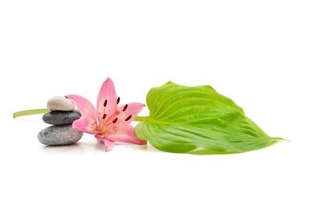 background of a spa with stones and lily flower on white