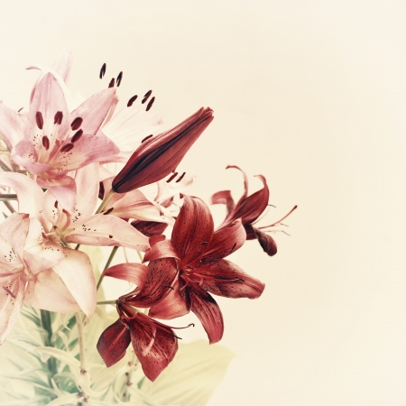 vintage lily flowers background