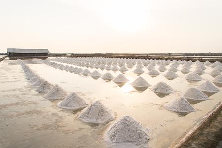 Heap of sea salt in a field prepared for harvest