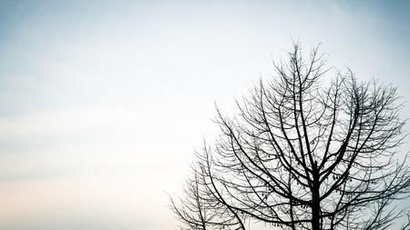 Trees in spring season photo