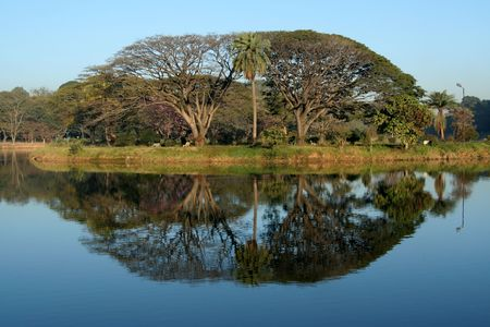 Interesting geometrical pattern by trees and their reflection photo