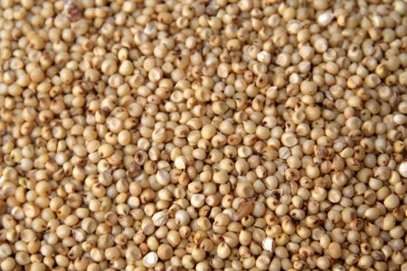 morsel: Small round yellowish white tropical cereal grass of the genus sorghum Stock Photo