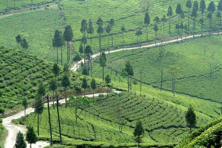 Road running through green mountain of tea garden Stock Photo - 4965906