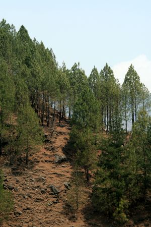 mud slide: Scarce growth of trees on hill surface leading to landslide