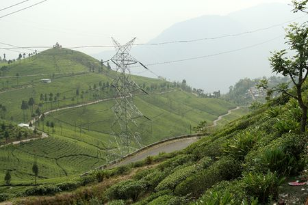 west bengal: Tea plantation on mountain slope with roads and electric transmission lines near Darjeeling, West Bengal, India, Asia