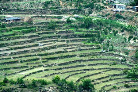 nicked: Patr�n de cultivo de paso que se adopt� en una regi�n monta�osa y inclinada en Uttaranchal, India, Asia