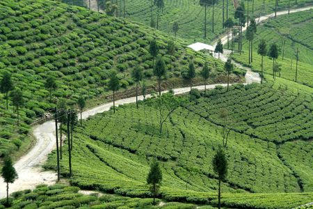 Road passing through tea plantation mountain slope photo