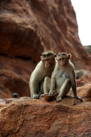 Two monkeys sitting prettily in diverse moods on a red rock