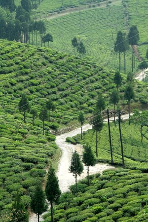 Road passing through tea garden near Darjeeling, West Bengal, India, Asia Stock Photo - 6009277