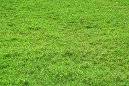 gratifying: Soothing sight of bed of velvety green grass