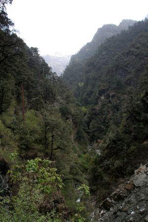 wilds: Thick vegetation covers in mountain along trekking path to Yamunothri, Uttarakahand, India, Asia