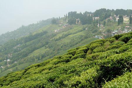 Ville de montagne avec jardin de th� en avant-plan, Darjeeling, West Bengal, en Inde, Asie Banque d'images