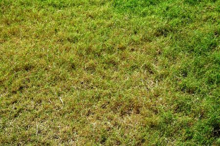 Soothing sight of bed of velvety green grass photo
