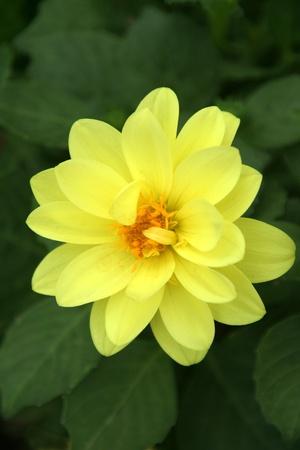 silken: Soft, silken and alluring petals of a yellow flower
