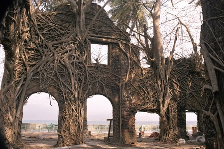 Ruin of abandoned building covered with roots in Ross Island, Port Blair, Andaman, India, Asia