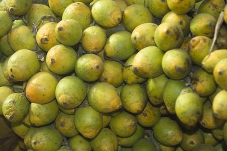 betelnut: Close-up of bunch of green betel-nut shells