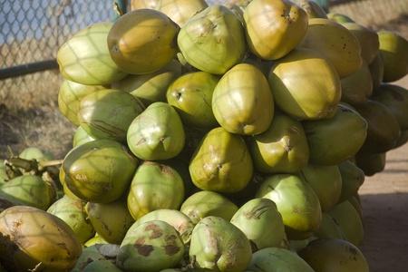 Bunch de noix de coco tendre vert brun�tre contenant b�n�fique boisson naturelle fra�che