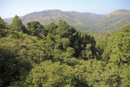 Lush, green forest trees in foreground and red barren mountain in background photo