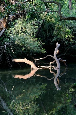Interesting pattern created by sun-soaked dry logs at Kavery Nisarga Dhama near Kushalnagara in Mysuru district, Karnataka, India, Asia