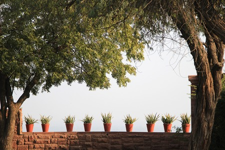 parapet: View of nine red earthen pots on parapet against light blue sky, housings plants, framed by foliage and trees
