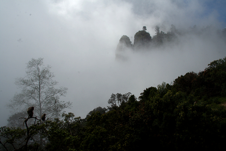 View of landscape draped in mist and fog from Pillar Rock Point, Kodaikanal, Tamil Nadu, India, Asia