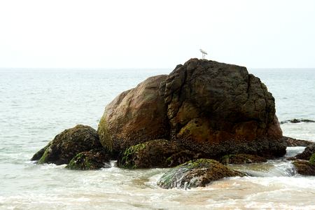 Tiny bird on top of elephant shaped rock at Kovalam Beach in Tiruvanthapuram, Kerala, India, Asia