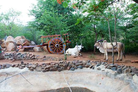 Beautifully decorated bullock cart and oxen at Garden near Alamatti Dam in Bagalkot District, Karnataka, India, Asia Reklamní fotografie