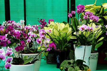 Collection of orchid and other decorative plants on display in a show