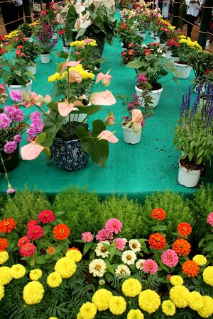 Flower plants and pots at Flower Show in Lalbagh Botanical Garden, Bengaluru, Karnataka, India, Asia