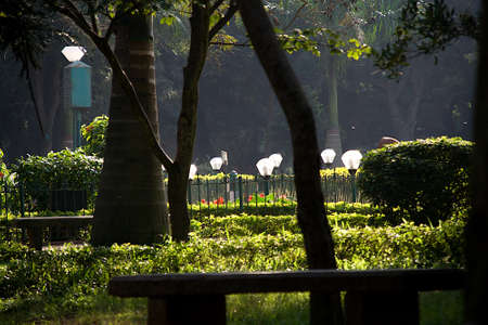 Delightful closer view of tree trunks, bushes, foliage and light domes in morning sunlight at Cubbon Park in Bengaluru, Karnataka, India, Asia Standard-Bild