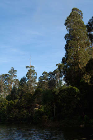 View of lofty trees on bank of lake at Kodaikanal in Tamil Nadu, India, Asia