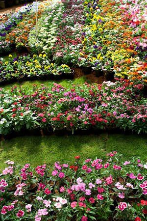 Beautiful view of plots of flowers at Republic Day Flower Show in Lalbagh, Bengaluru, India, Asia