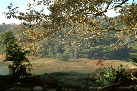 View of enchanting landscape in morning sunlight on edge of lake at Thekkady in Kerala, India, Asia