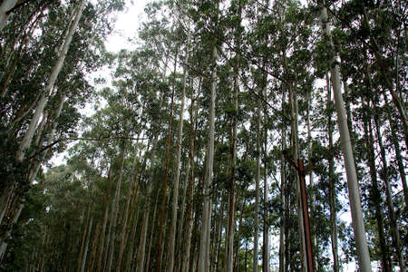 View of densely populated tall trees with green vegetation at top in jungle