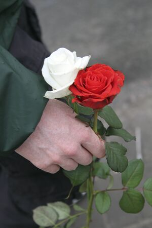 white and red roses in a man hand. mourning scenario with flowers Фото со стока