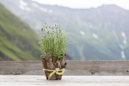 Green plant in a stylish pot made of bark decorated with a ribbon with a heart. Hiking travel outdoor concept, journey in the mountains, Kals am Grossglockner, Austria. Stock Photo
