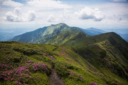 Landscape of summer mountains with pink rhododendron. Carpathians, Marmaroshchyna, Maramures, Ukraine Stock Photo