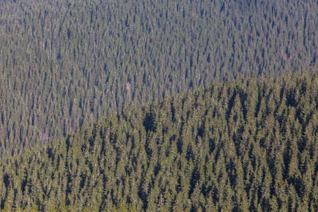 Aerial landscape view of the woodland background forming a graphic texture