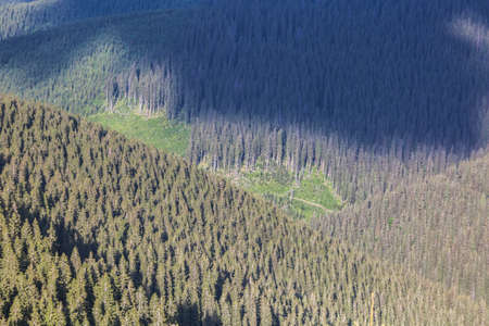 Aerial landscape view of the woodland background with a cutting in the center