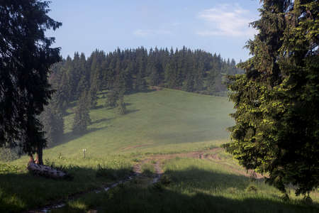 Beautiful summer landscapes in Carpatian mountains, travel outdoor concept view of the meadow surrounded by trees after the rain