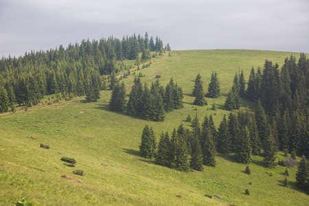Picturesque summer mountain meadow landscape of Carpathians, Ukraine