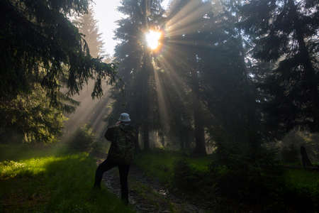 A tourist looks at sunlight spruce forest. Forest road under sunrise sunbeams