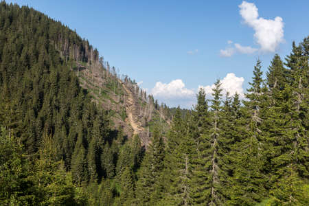 Felled trees on a mountain slope