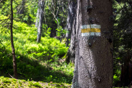 Trail marking in the wood. Painted mark in yellow for tourist, hikers and trekkers. It helps to navigate walker during hiking